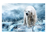 Polar Bear Hunting in a River Prints