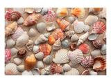 Sea Shells on Sandy Beach Print