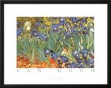 Vincent Van Gogh Les Irises Art Print Poster Prints