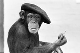 Artist Chimp 1955 Lámina fotográfica por  Williams