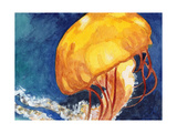 Jellyfish Prints by Jennifer Redstreake Geary