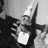 Sally the Dog at Annual Dogs Christmas Party in Bristol, 1958 Photographic Print by Maurice Tibbles