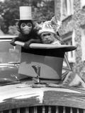 Monkey's at Kilverstone Wildlife Park 1983 Photographic Print by Arthur Sidey