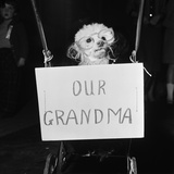Grandma the Dog at Annual Dogs Christmas Party in Bristol, 1958 Photographic Print by Maurice Tibbles