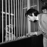 The Who Group 1965 Fotografisk trykk av Charles Ley
