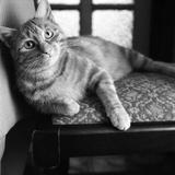 Ginger Cat Reprodukcja zdjęcia autor Staff
