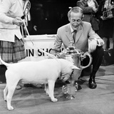 White Bull Terrier Stampa fotografica di  Staff