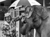 Jack Fossett and Maureen the Elephant Photographic Print by  Staff