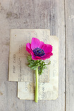Love Note Photographic Print by Sarah Gardner