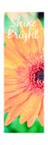 Shine Bright Daisy Lámina giclée prémium por Susan Bryant