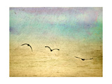 Seagulls in the Sky II Prints by Ynon Mabat