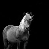 The Mare Photographic Print by Carol Walker