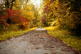 Quiet Autumn Path Photographic Print by Kelly Poynter