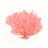 Watercolor Coral I Premium Giclee Print by Jairo Rodriguez