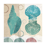 Shell Collage II Posters by Dan Meneely