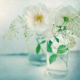 White Peonies Photographic Print by Sarah Gardner