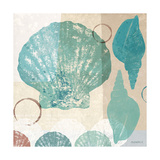 Shell Collage I Prints by Dan Meneely