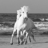 Horses at the Beach Photographic Print by Carol Walker