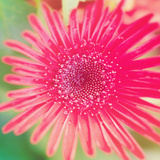 Pink Fun II Photographic Print by Susan Bryant