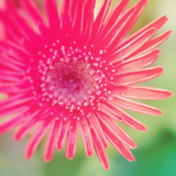 Pink Fun I Photographic Print by Susan Bryant