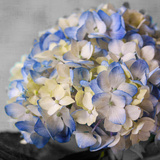 Hydrangeas I Photographic Print by Susan Bryant