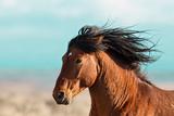 Running Horse Photographic Print by Carol Walker