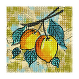 Fashion Fruit II Premium Giclee Print by Nicholas Biscardi