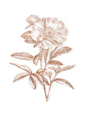 Etched Metallic Floral I Premium Giclee Print by  A Fresh Bunch