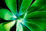 Green Intrigue Photographic Print by Bruce Nawrocke
