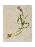 Botanica IV Art by Patricia Pinto