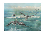 Pelican Beach Prints by Bruce Nawrocke