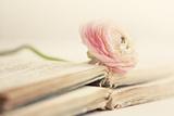 Peony Books Photographic Print by Sarah Gardner