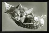 Kätzchen in der Hängematte Kunstdrucke von Keith Kimberlin