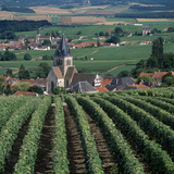 Vineyards of Ville Domange, North Side of Montagne De Reims Photographic Print by Joe Cornish