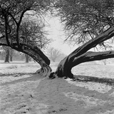 A Snow Scene in Richmond Park, Greater London Photographic Print by John Gay