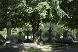 Trees and Graves at Brompton Cemetery, Kensington, London Photographic Print by Richard Bryant