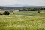 Landscape, Southern Burgenland, Austria Photographic Print by Rainer Schoditsch