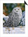 Snowy Owl Posters van William Vanderdasson