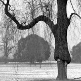 A Mature Weeping Tree in Winter in Kew Gardens with Other Trees Behind, Greater London Photographic Print by John Gay