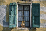 Typical French Window, with Turquoise Wooden Shutters and Terracotta Jug Photographic Print by  LatitudeStock