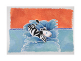 Happy Baby Zebra Jumping into Water Reprodukcje autor Susie Jenkin Pearce