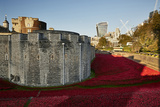 First World War Poppy Memorial Installation, Called the Blood Swept Lands and Seas of Red Photographic Print by Richard Bryant