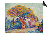 The Pine Tree at St, Tropez, 1909 Poster by Paul Signac