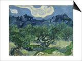 Van Gogh, Olive Trees Posters