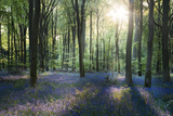 Sunlight Through Trees in Bluebell Woods, Micheldever, Hampshire, England Photographic Print by David Clapp