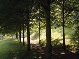 Trees at Bensheim, Staatspark Fã¼Rstenlager - Germany Photographic Print by Roman von