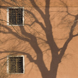 Shadow of Tree on Orange Venice Building Exterior Photographic Print by Mike Burton