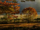 Arley Arboretum, Worcestershire - Evening Light Shining on Oak Trees Fotografisk tryk af Clive Nichols