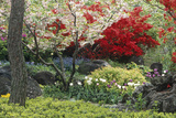 Spring Garden with Red Leaves on Tree and Blossom Photographic Print by Michael Freeman