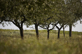 Leafy Trees in an Unmown Field Photographic Print by Rainer Schoditsch